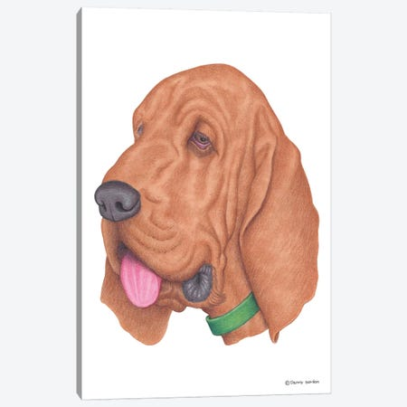 Bloodhound Canvas Print #DNG9} by Danny Gordon Art Print