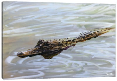 A Gator Canvas Art Print