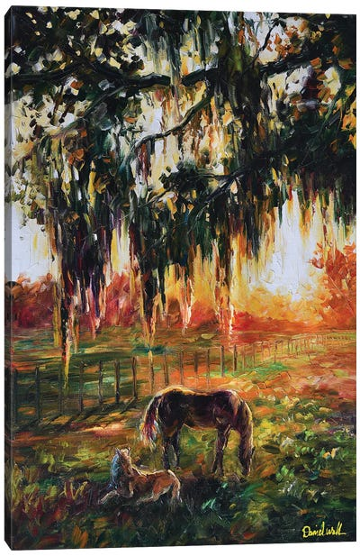 Ranch Horse At Sunset Spanish Moose Tree Canvas Art Print