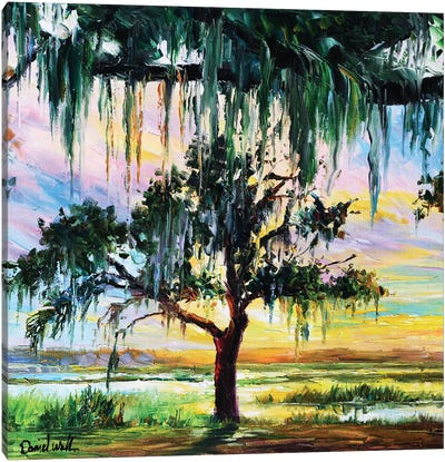 Swamp Spanish Moose Tree Canvas Art Print