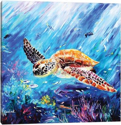 A Cute Turtle Canvas Art Print