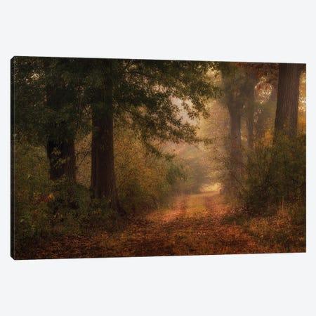 Autumn's Walk III Canvas Print #DNY116} by Danny Head Canvas Art
