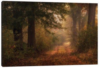 Autumn's Walk III Canvas Art Print
