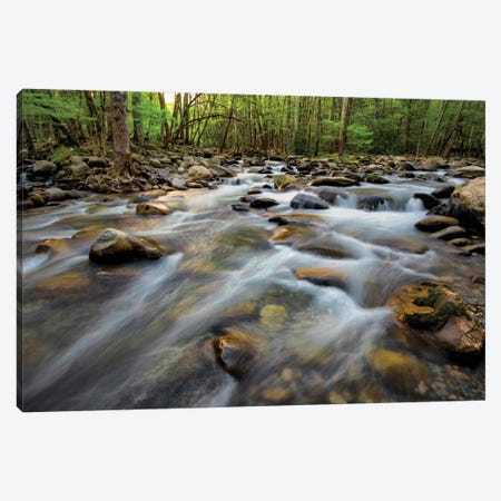 Golden Flow Canvas Print #DNY11} by Danny Head Canvas Wall Art