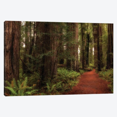 A Walk in the Woods I Canvas Print #DNY125} by Danny Head Canvas Print