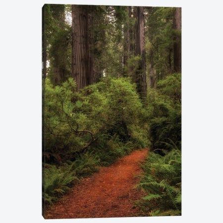 Forest Path III Canvas Print #DNY134} by Danny Head Canvas Wall Art