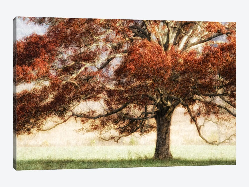 Sunbathed Oak I by Danny Head 1-piece Canvas Wall Art