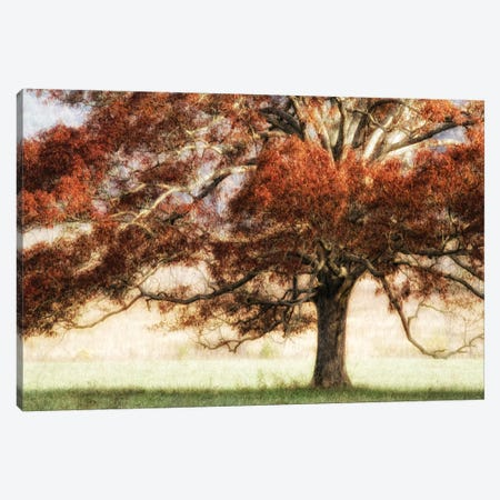 Sunbathed Oak I Canvas Print #DNY1} by Danny Head Canvas Art