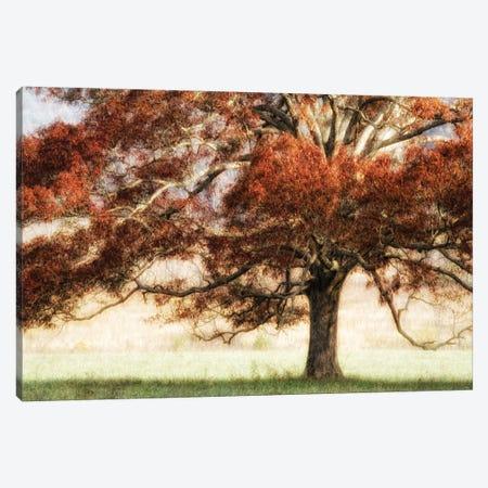 Sunbathed Oak I Canvas Print #DNY1} by Danny Head Canvas Art