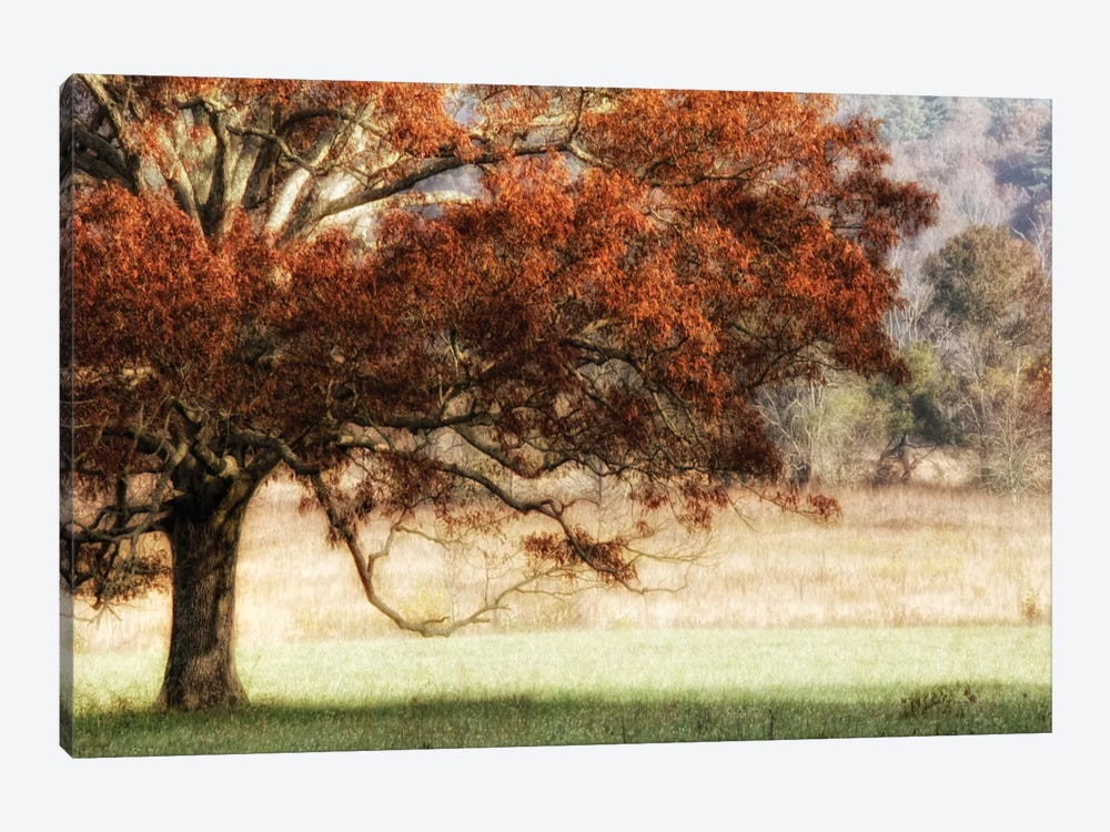 Sunbathed Oak II by Danny Head 1-piece Art Print