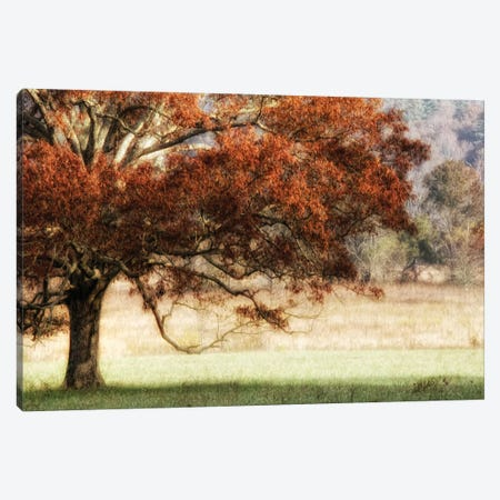 Sunbathed Oak II Canvas Print #DNY2} by Danny Head Canvas Art