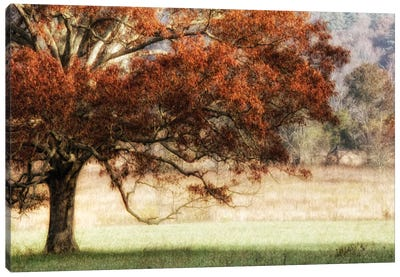 Sunbathed Oak II Canvas Art Print