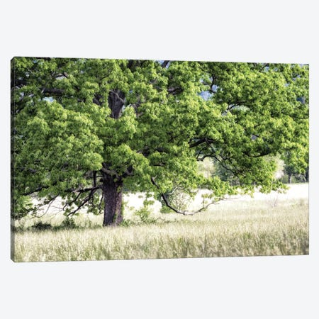 Tree In Summer Canvas Print #DNY30} by Danny Head Canvas Art