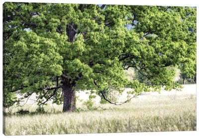 Tree In Summer Canvas Art Print