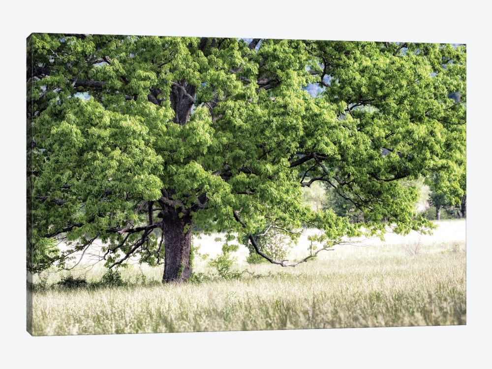 Tree In Summer by Danny Head 1-piece Canvas Wall Art