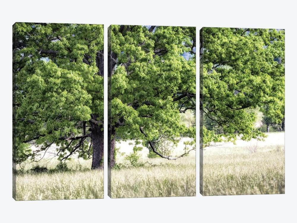 Tree In Summer by Danny Head 3-piece Canvas Wall Art