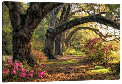 Under The Live Oaks I Canvas Print #DNY32