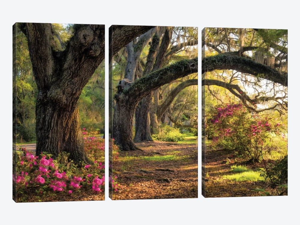 Under The Live Oaks I by Danny Head 3-piece Canvas Wall Art