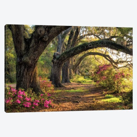 Under The Live Oaks I Canvas Print #DNY32} by Danny Head Canvas Art