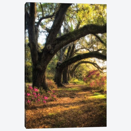 Under The Live Oaks II Canvas Print #DNY33} by Danny Head Canvas Wall Art