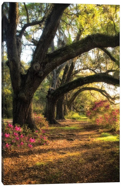 Under The Live Oaks II Canvas Print #DNY33