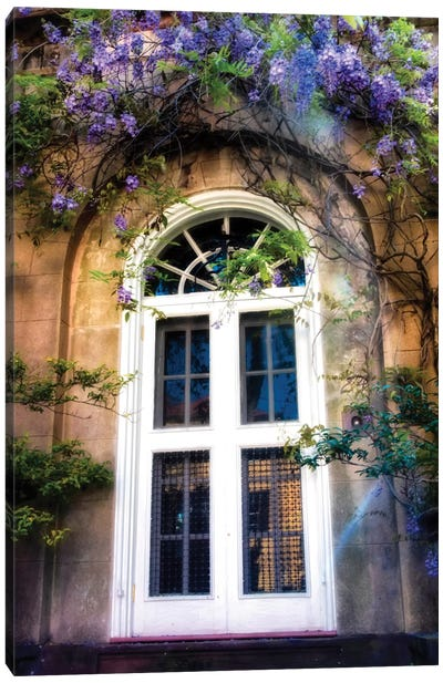 Wisteria Canvas Art Print