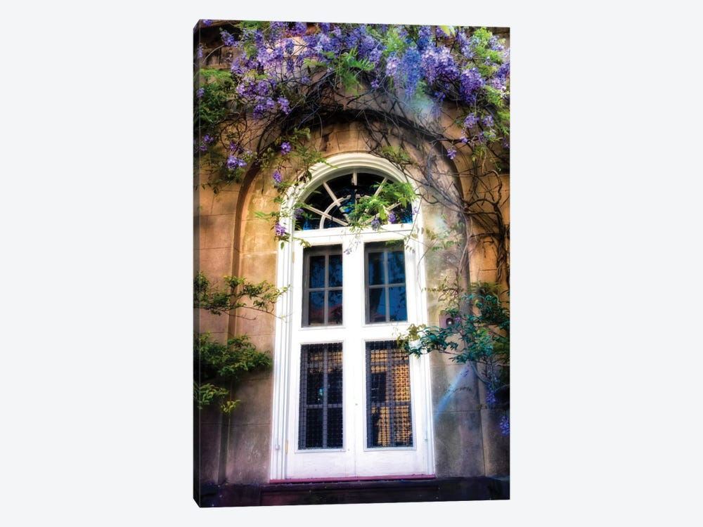 Wisteria by Danny Head 1-piece Canvas Print