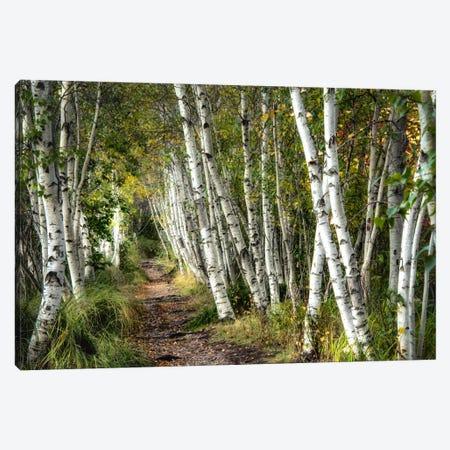 A Walk Through The Birch Trees Canvas Print #DNY39} by Danny Head Canvas Artwork