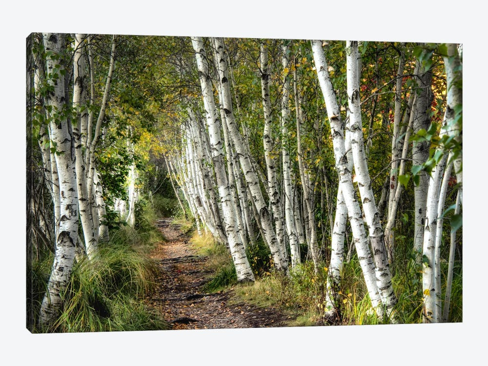 A Walk Through The Birch Trees by Danny Head 1-piece Art Print