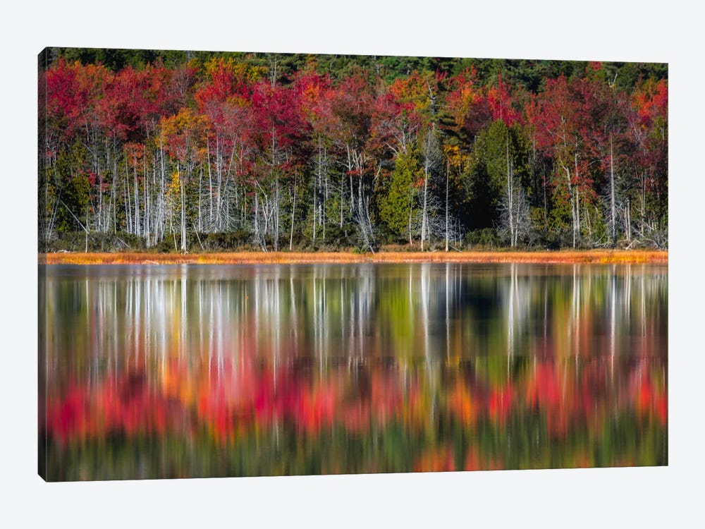Autumn Reflections by Danny Head 1-piece Canvas Art Print