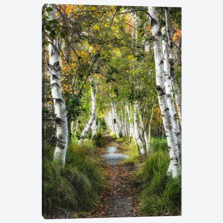 Birch Path I Canvas Print #DNY42} by Danny Head Canvas Art Print