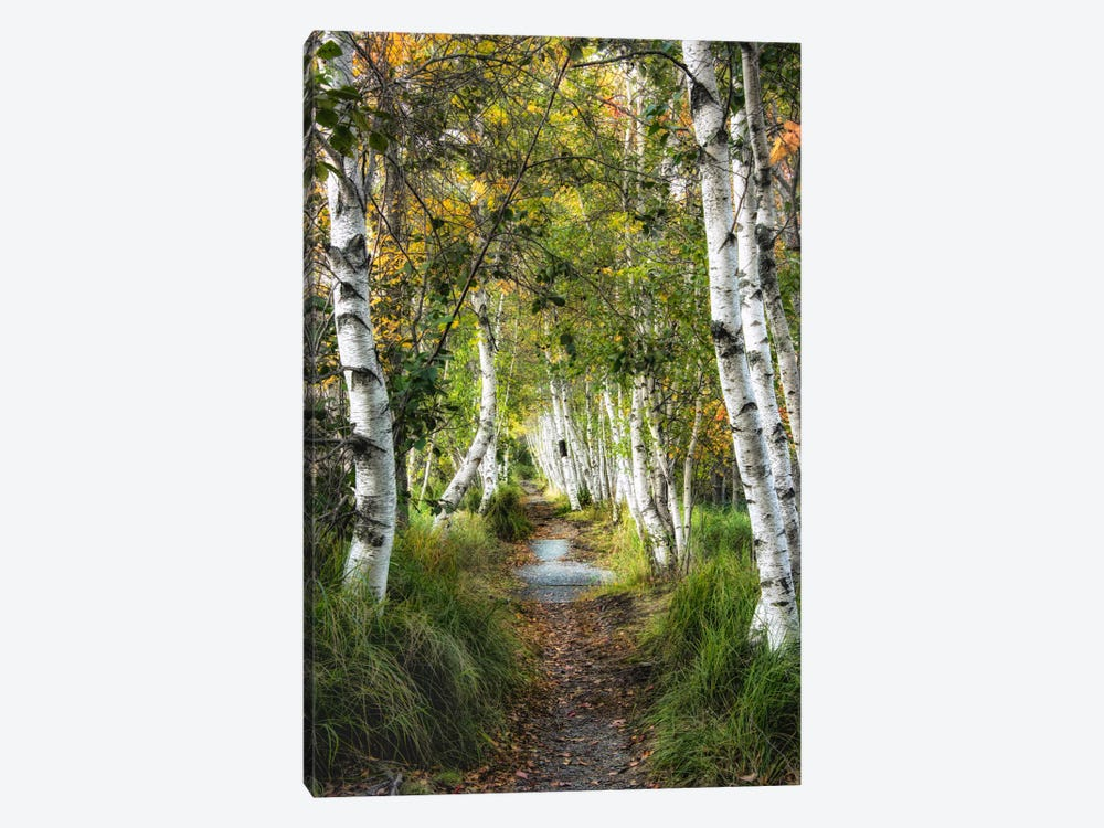 Birch Path I 1-piece Art Print
