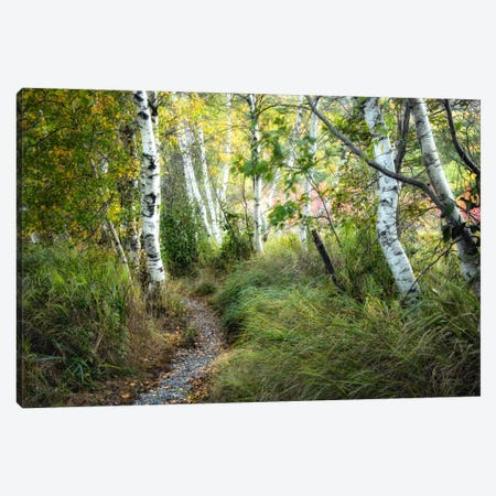 Birch Trees & Tall Grass Canvas Print #DNY44} by Danny Head Canvas Wall Art
