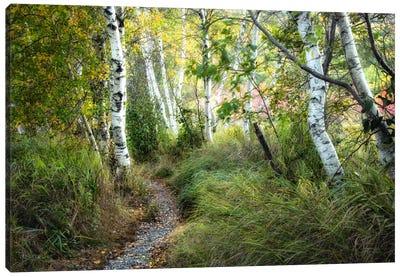 Birch Trees & Tall Grass Canvas Print #DNY44