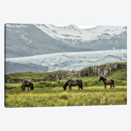 Grazing at The Glacier Canvas Print #DNY66} by Danny Head Canvas Artwork