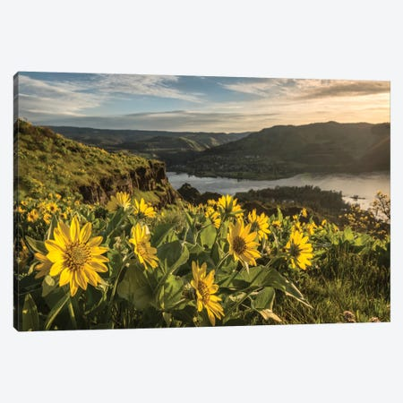 Soaking Up The Sun Canvas Print #DNY71} by Danny Head Canvas Art