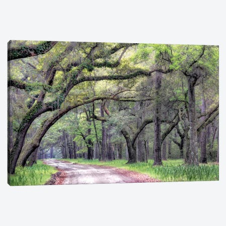 Dirt Road I Canvas Print #DNY8} by Danny Head Canvas Wall Art