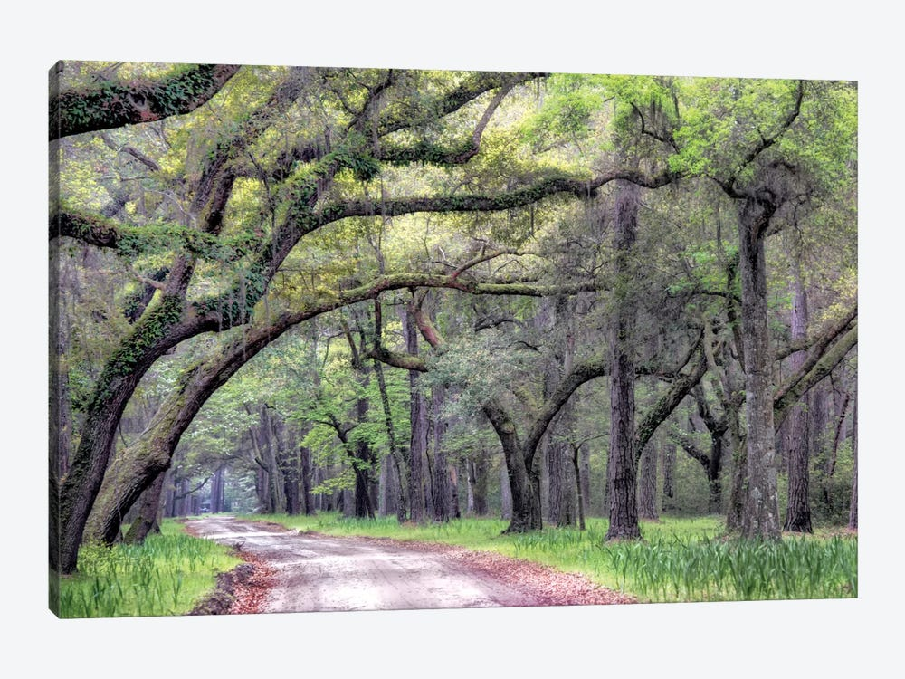Dirt Road I by Danny Head 1-piece Art Print