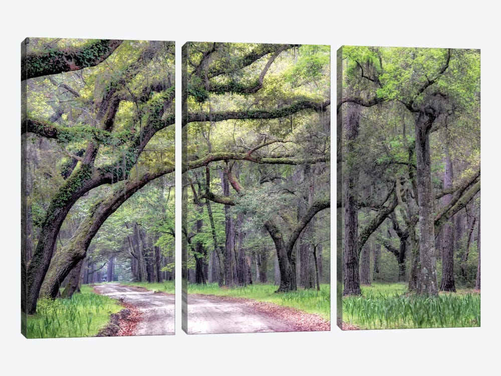 Dirt Road I by Danny Head 3-piece Canvas Art Print