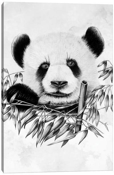 Eating Panda Canvas Art Print