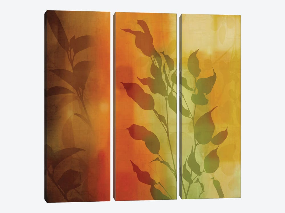 Nature's Glow I by Chris Donovan 3-piece Canvas Artwork