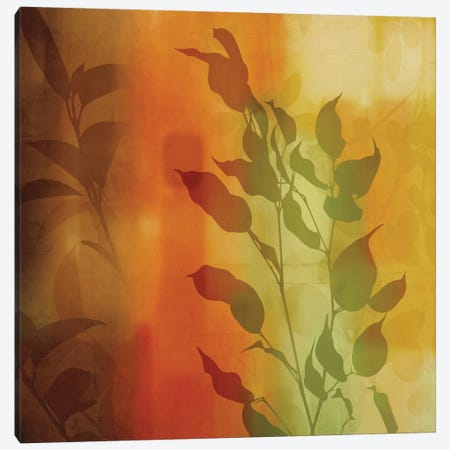 Nature's Glow I Canvas Print #DON112} by Chris Donovan Canvas Art Print