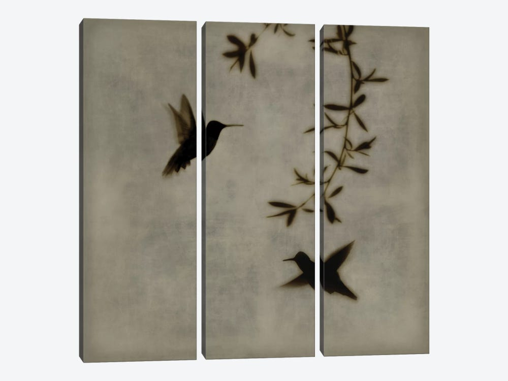 Dance In Flight I by Chris Donovan 3-piece Canvas Art