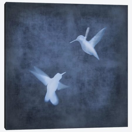 Flight In Blue I Canvas Print #DON64} by Chris Donovan Canvas Artwork