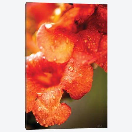 Orange Glory Canvas Print #DOQ11} by Donnie Quillen Canvas Print