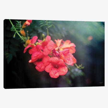 Summer Rain Canvas Print #DOQ12} by Donnie Quillen Canvas Print
