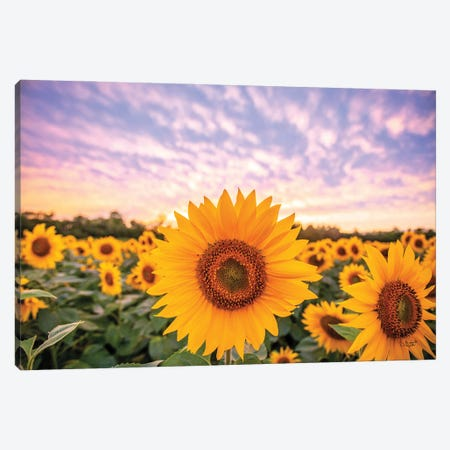 Sunflower Sunset Canvas Print #DOQ13} by Donnie Quillen Canvas Print