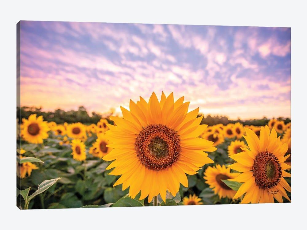 Sunflower Sunset by Donnie Quillen 1-piece Canvas Art