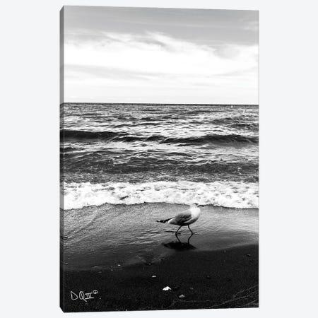 Seagull I Canvas Print #DOQ7} by Donnie Quillen Canvas Art