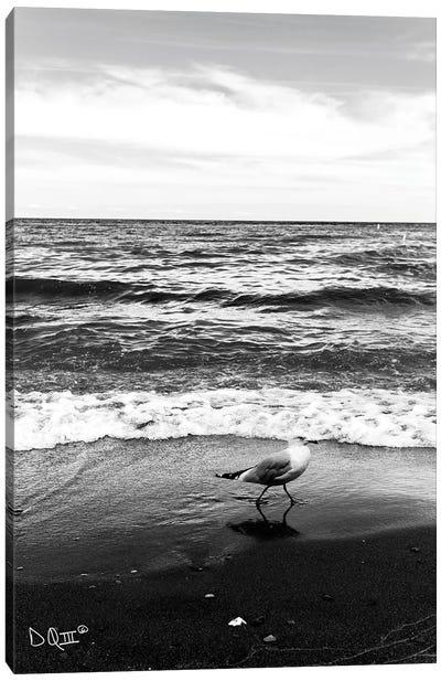 Seagull I Canvas Art Print